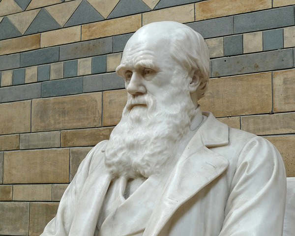 darwin-charles